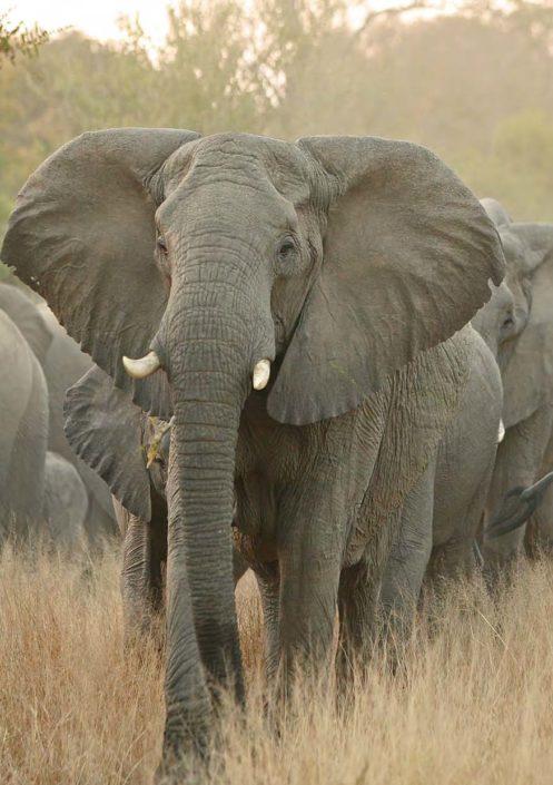 Africa is my home walking safaris