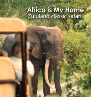 Africa is My Home - Zululand Classic Safari