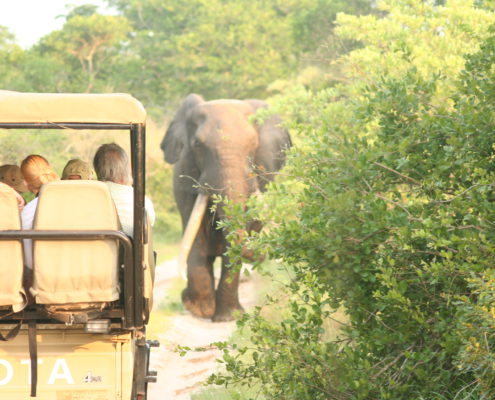 Dreams 4 Africa Specialises in safaris in Africa and South Africa – Cape Town and Garden Route – Kruger Park and private game reserves and lodges.