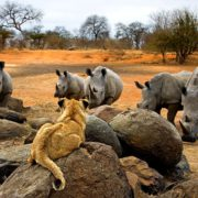 Tshukudu Private Game Reserve Packages