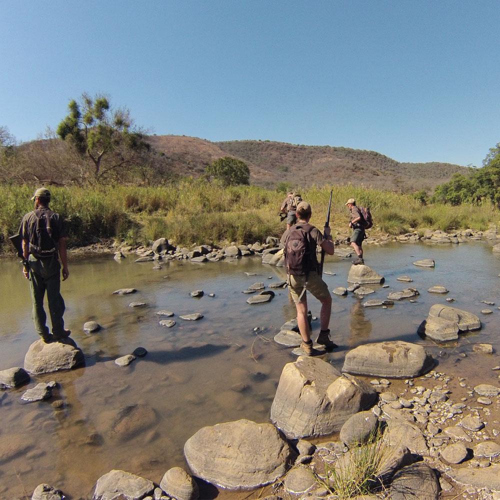 safari crossing the river